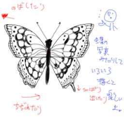 蝶の描き方 個人的な絵の描き方とか