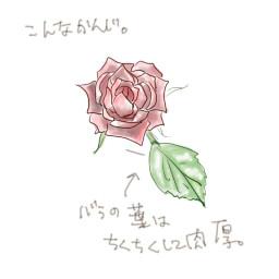 バラの描き方 個人的な絵の描き方とか